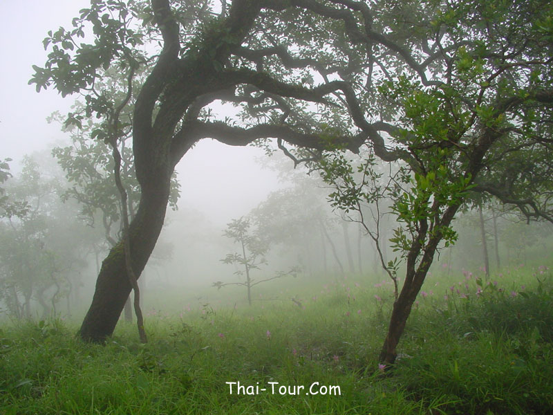 http://www.thai-tour.com/thai-tour/northeast/chaiyaphum/data/place/kragiao/large_pic/field.jpg